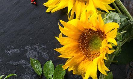 Week 22: Sun & Sunflowers